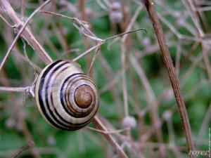 Periode de ramassage des escargots